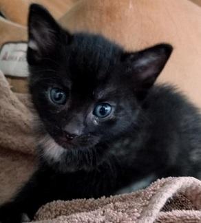 Beth - Kitten