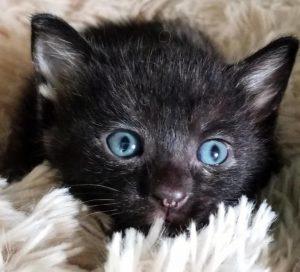 Beth kitty