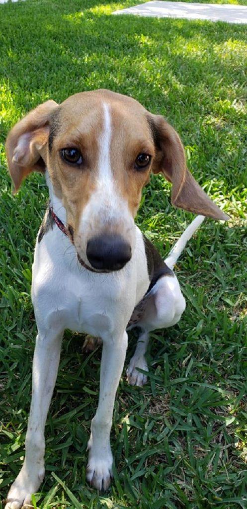 Ayla's Acres No-Kill Animal Rescue, Inc – Providing Love