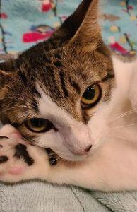 AylasAcres_cat Becky