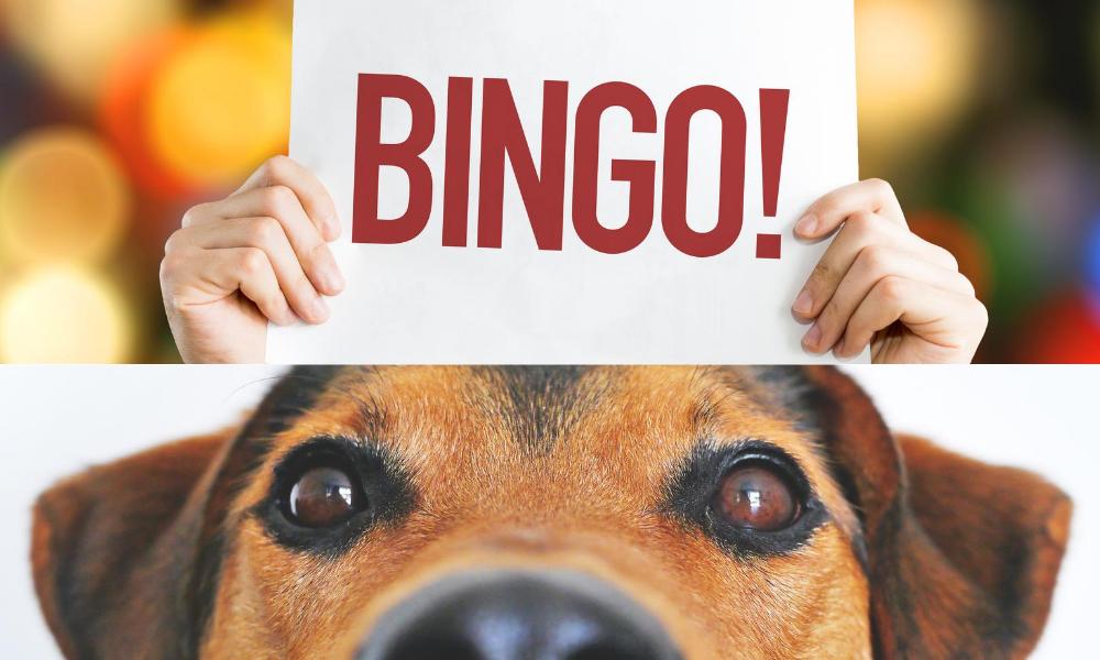 Bingo Dog2