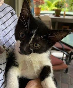 Georgia_Cat