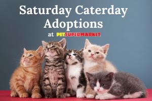 PetSupermarket Saturday Cat Adoptions