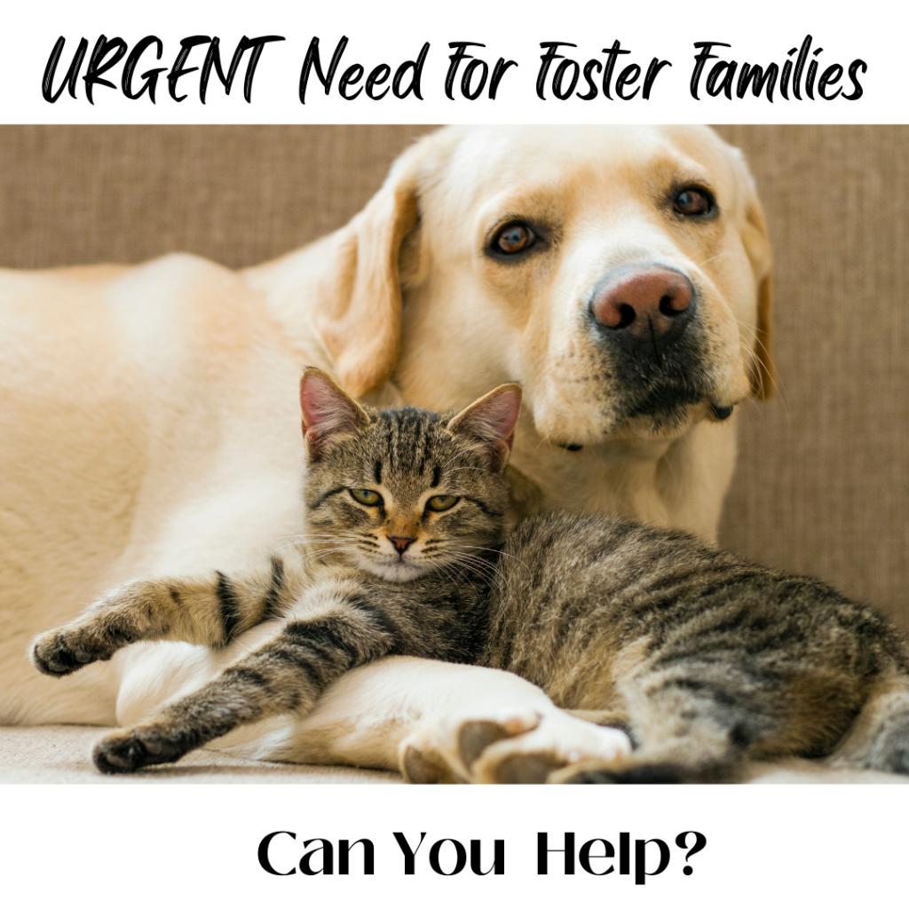 We Need Fosters URGENT – instagram